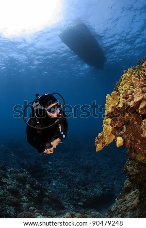 Diver checking out some unusual Coral formations in South Kona Hawaii - stock photo