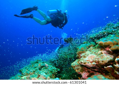 Diver dive at the reef with small quick silvers - stock photo