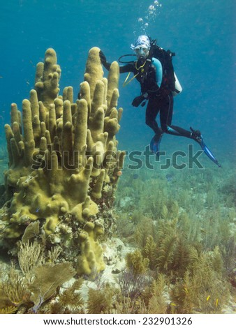 diver-girl and big corrals - stock photo