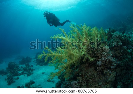 diver hovering behind softcoral in sunbeams