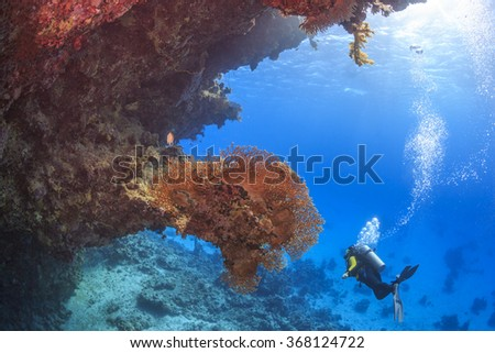 Diver in the Red Sea, Egypt - stock photo