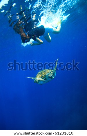 Diver snorkeling to see green turtle - stock photo