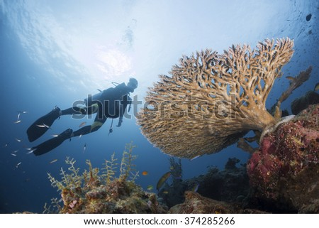 Diver swim over the stag-horn corals at Similan Islands, THAILAND - stock photo