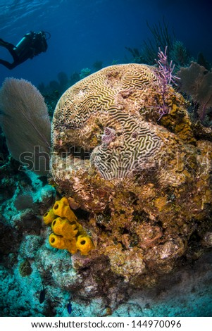 Diver swimming by a coral head with sponges - stock photo