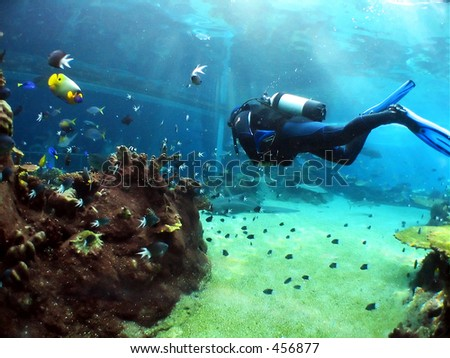Diver swimming to large underwater viewing window - stock photo