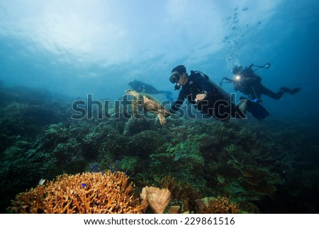 diver swimming with sea turtle - stock photo
