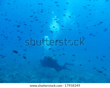 Diver with lots of fish - stock photo