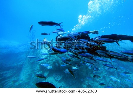 Diver with shoal of fish. Red Sea, Egypt