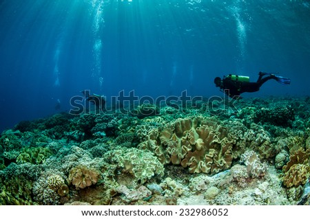 Divers and mushroom leather corals in Banda, Indonesia underwater photo. Divers swimming above mushroom leather Sarcophyton sp. - stock photo