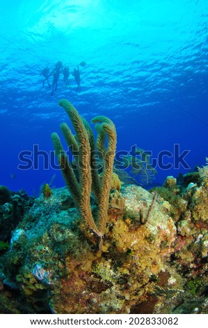 Divers with Coral Reef, Grand Cayman - stock photo