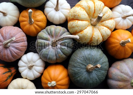 Diverse assortment of pumpkins on a wooden background. Autumn harvest. - stock photo
