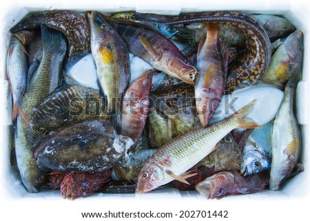 Diverse fishes in a cooling box - stock photo