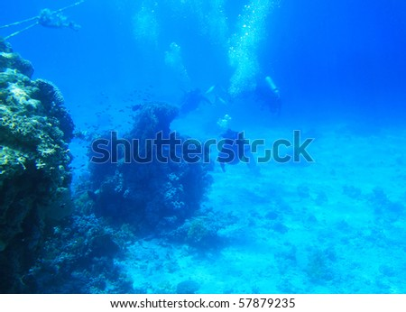 Diving in Red Sea - Egypt