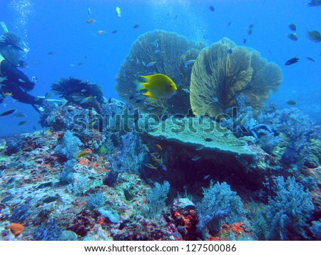 diving the coral reef of Richelieu Rock & the Similan Islands of Thailand - stock photo