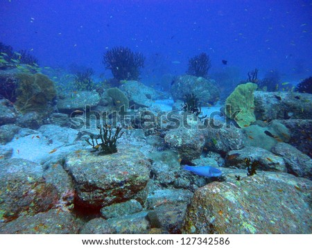 diving the coral reef of the Similan Islands and Richelieu Rock in Thailand - stock photo