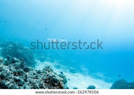 Diving underwater - stock photo