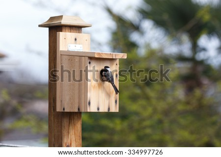 DIY wood birdhouse and  Black-capped Chickadee  - stock photo