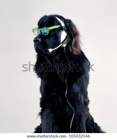 DJ Dog - stock photo