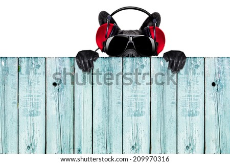 dj dog listening to music behind an empty and blank wood wall - stock photo