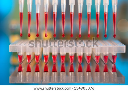 DNA analysis: loading reaction mixture into 96-well plate with multichannel pipette - stock photo