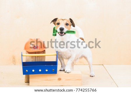 Do it yourself stock images royalty free images vectors do it yourself diy concept with funny dog as builders assistant solutioingenieria Gallery