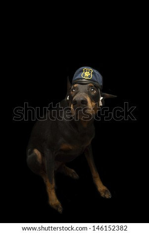 Doberman Dressed up as Police K9 Canine Cop - stock photo