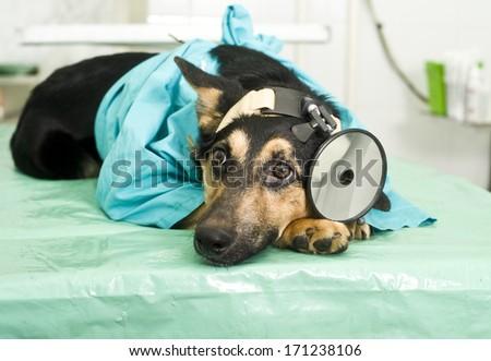 Doctor Doggie - stock photo
