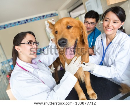 Doctor examining a cute dog at the vet - stock photo