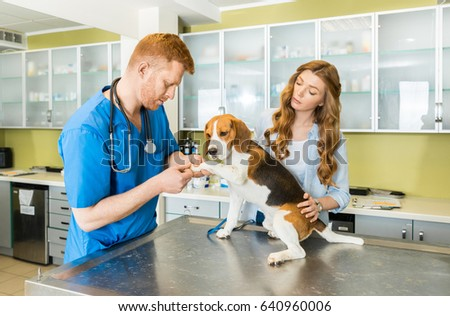 veterinary stock images royaltyfree images  vectors