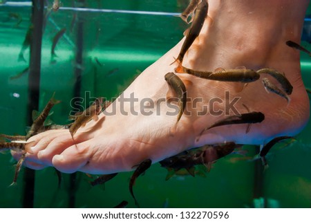 Doctor fish nibble at corneal of the foot