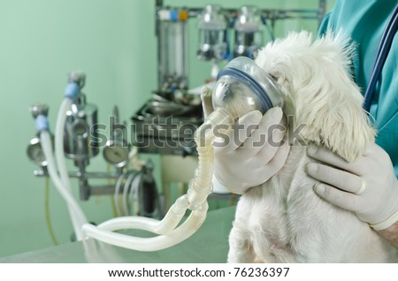 doctor helping a dog with lung problems