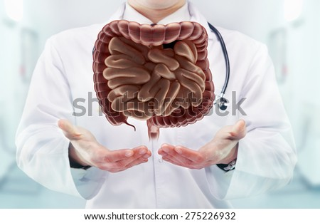 Doctor with stethoscope and digestive system on the  hands in a hospital. High resolution.  - stock photo