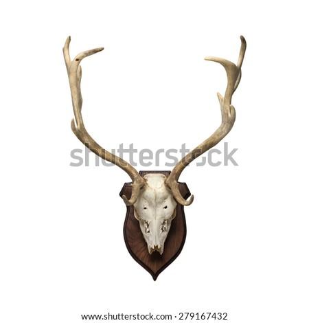 doe skull on the white background - stock photo