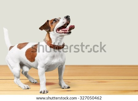 Dog. - stock photo