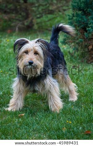 dog 2 - stock photo