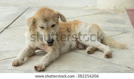 Dog , alone - stock photo