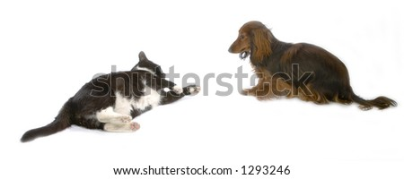 dog and a cat - stock photo