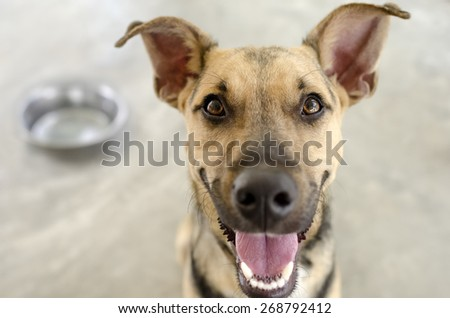 Dog and Bowl with a hungry happy closeup of a funny dog waiting for his food. - stock photo
