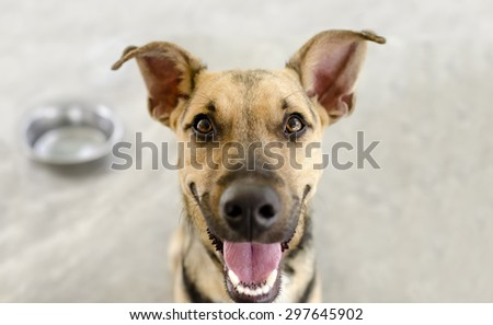 Dog and bowl with a hungry happy closeup of a funny dog waiting for his meal. - stock photo