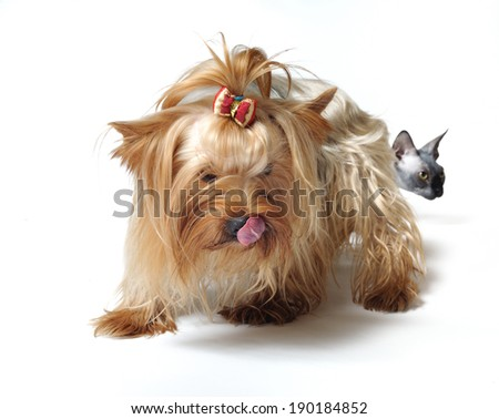 dog and cat - stock photo