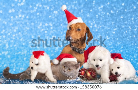 dog and cat and kitens wearing a santa hat - stock photo