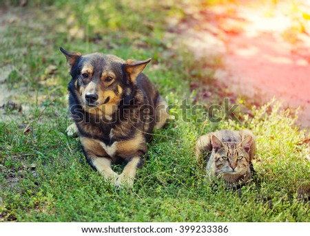 Dog and cat best friends, lying together on the grass - stock photo