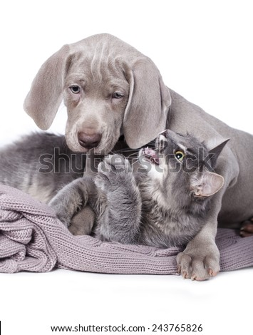 Dog and cat best friends playing together outdoor - stock photo