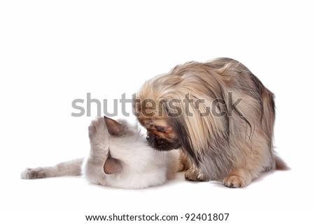 dog and Cat in front of a white background - stock photo