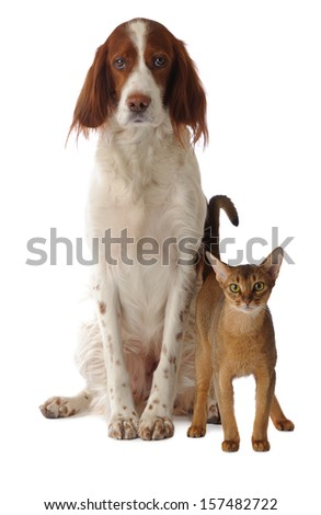 dog and cat, isolated, studio