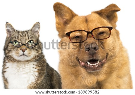Dog and cat on white background wearing glasses - stock photo