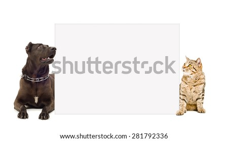 Dog and cat peeking from behind banner isolated on white background - stock photo