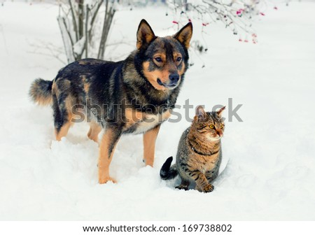Dog and cat playing in the snow
