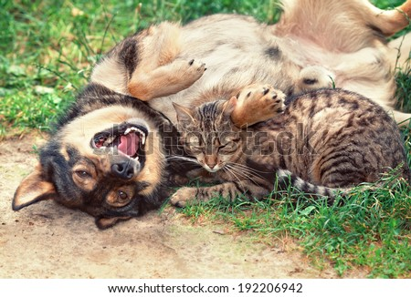 Dog and cat playing outdoor. Dog lying on the back - stock photo