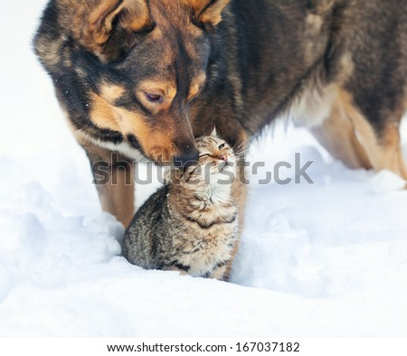 Dog and cat playing together outdoor in the snow - stock photo